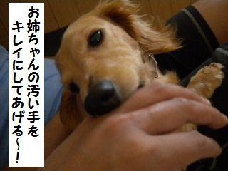DSCN8087_20100614164703.jpg