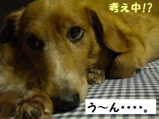 DSCN8094_20100511150914.jpg