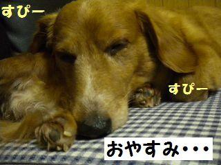 DSCN8101_20100511150913.jpg