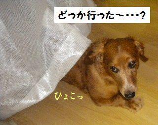 DSCN8101_20100612171819.jpg