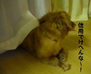 DSCN8102_20100612171818.jpg