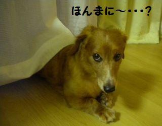 DSCN8103_20100612171818.jpg