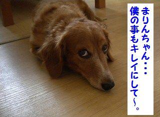 DSCN8229_20100614164713.jpg