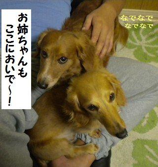 DSCN8238_20100330165234.jpg