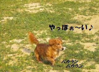 DSCN8286.jpg
