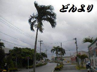 DSCN8597.jpg