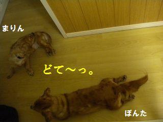 DSCN8983.jpg