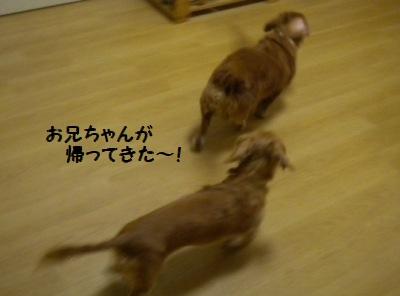 DSCN9037_20110104162529.jpg
