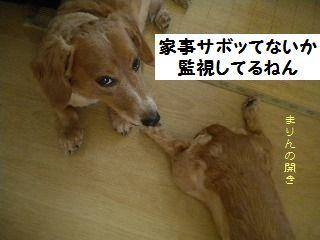 DSCN92172.jpg
