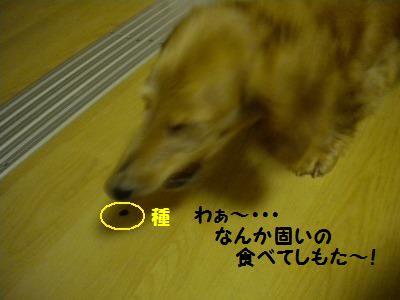 DSCN9456_20100627164727.jpg
