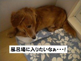 DSCN9546_20100628164812.jpg