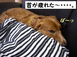 DSCN9688_20100501183905.jpg
