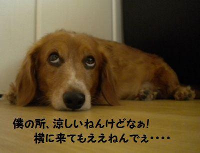 DSCN97382.jpg