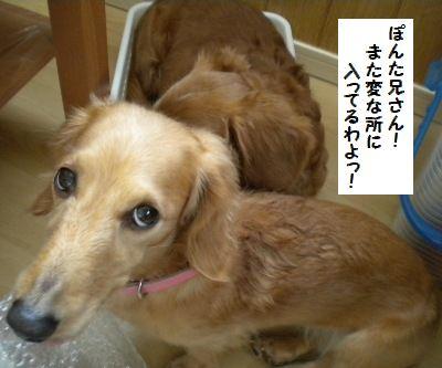 DSCN9783_20101221180948.jpg