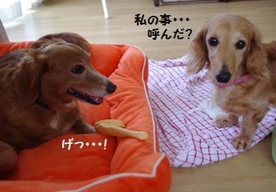 IMGP0021_20110530133627.jpg