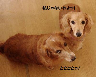 IMGP0033_20111021211124.jpg