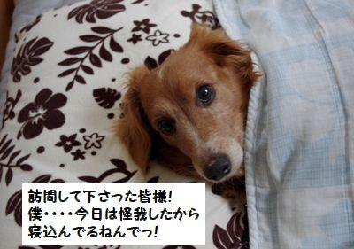 IMGP0357_20110323135735.jpg