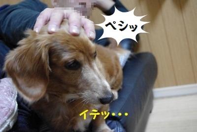 IMGP03781.jpg