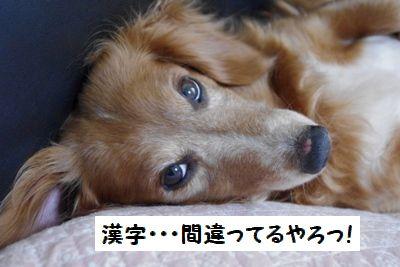 IMGP0415_20110326204522.jpg