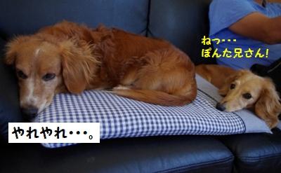 IMGP0438.jpg