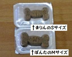 IMGP0515.jpg