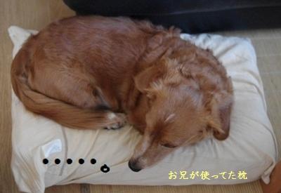 IMGP06902.jpg