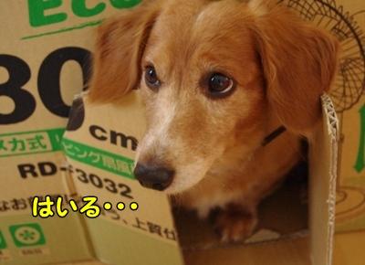 IMGP0737_20110831162207.jpg