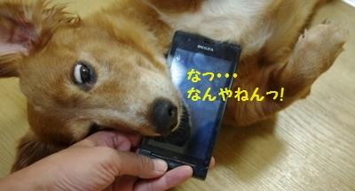 IMGP0856.jpg