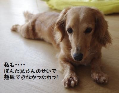 IMGP1032_20110606173242.jpg