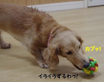 IMGP3876.jpg