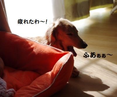 IMGP5535.jpg