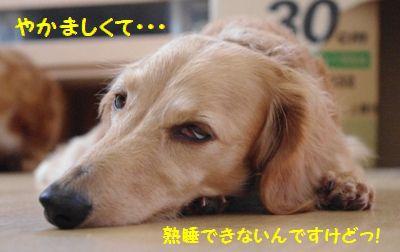 IMGP6950_20110927185432.jpg