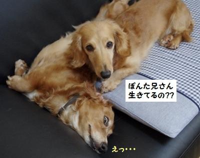 IMGP6991(2).jpg