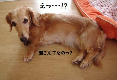 IMGP7033.jpg
