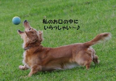 IMGP7108.jpg