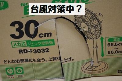 IMGP8106.jpg