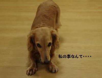 IMGP8797_20111010190207.jpg