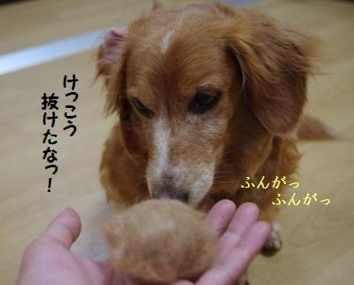 IMGP9467.jpg