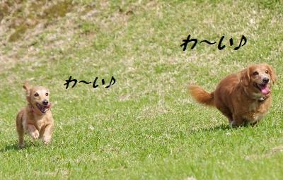 IMGP9676.jpg