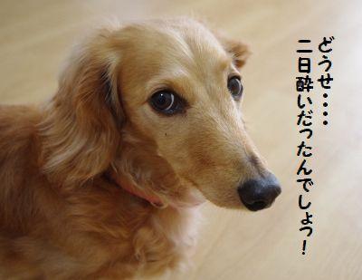 IMGP9768_20110422202957.jpg
