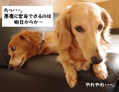 IMGP9841_20111018182921.jpg