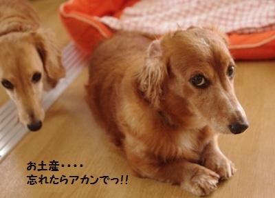 IMGP9985_20111019182107.jpg