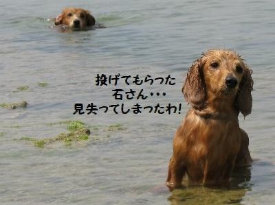 IMG_0303_20110403155045.jpg