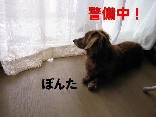IMG_keib.jpg