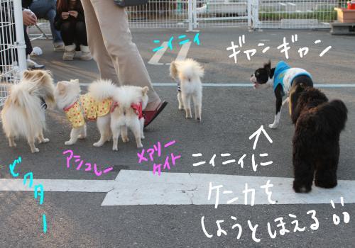 PONZU59+090_edited-1_convert_20091018203551.jpg