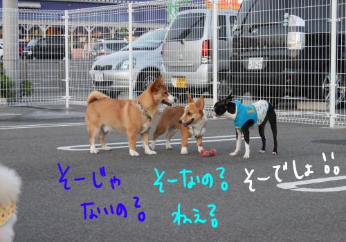 PONZU59+207_edited-1_convert_20091018204820.jpg