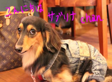 ponnzu55+060_edited-1_convert_20091008201644.jpg