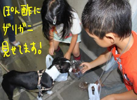ponzu45+106_edited-1_convert_20090920105250.jpg