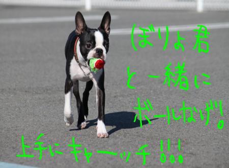 ponzu45+325_edited-1_convert_20090920135152.jpg