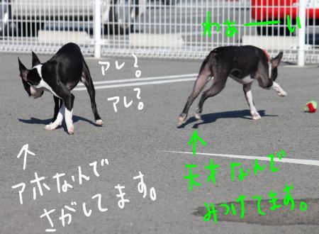 ponzu45+339_edited-1_convert_20090920135642.jpg